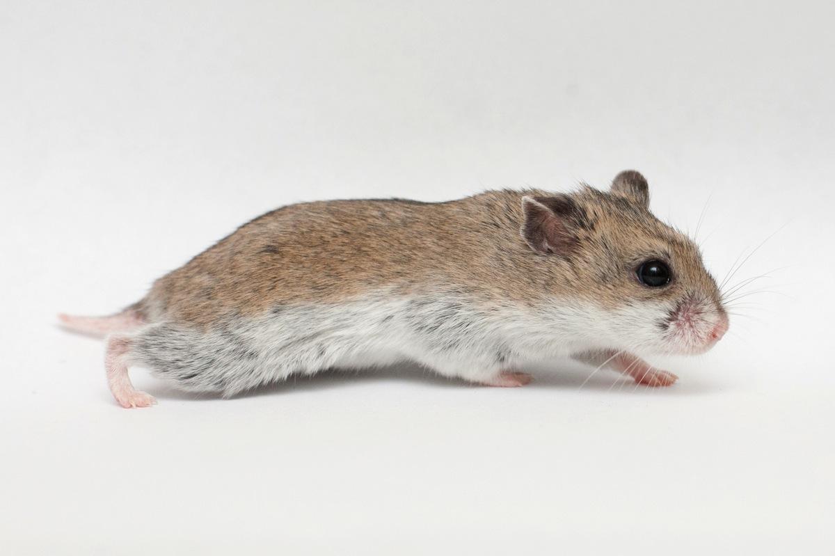 Good Night Sweet Hamster